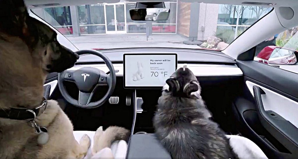 Tesla's 'Dog Mode' Allows People to Safely Leave Their Pets in the Car