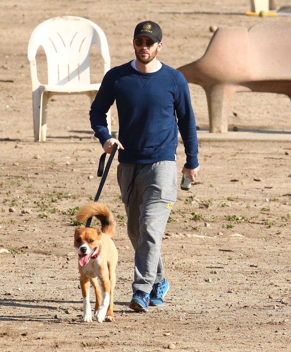 Actor Chris Evans walking his dog Dodger