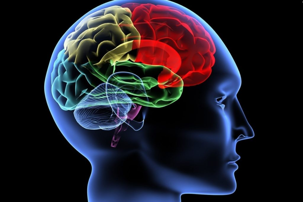 A depiction of the human brain